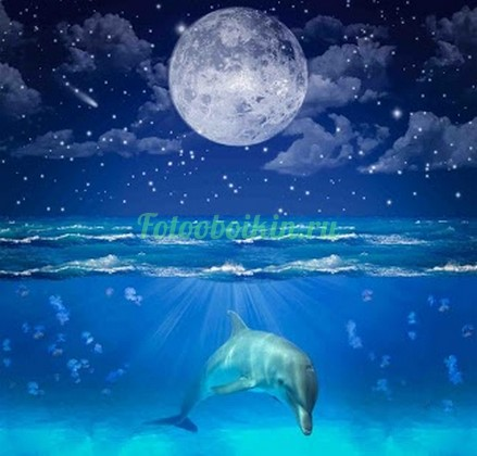 Фотообои Дельфин под водой