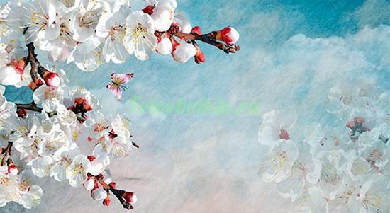 Фотообои Ветка сакуры на фоне неба