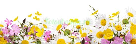 Фотообои Ромашки и полевые цветы