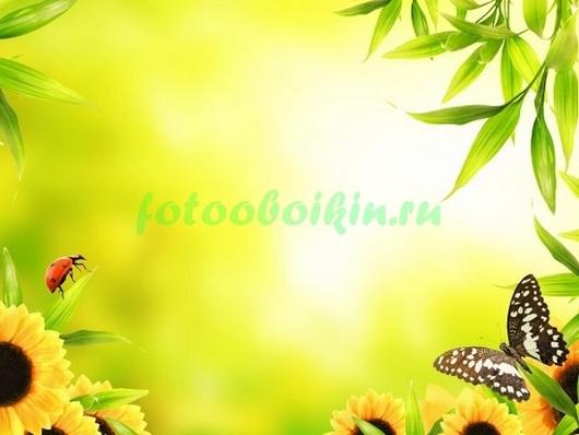 Фотообои Бабочка и подсолнухи