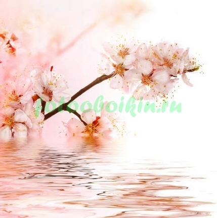Фотообои Ветка сакуры над водой