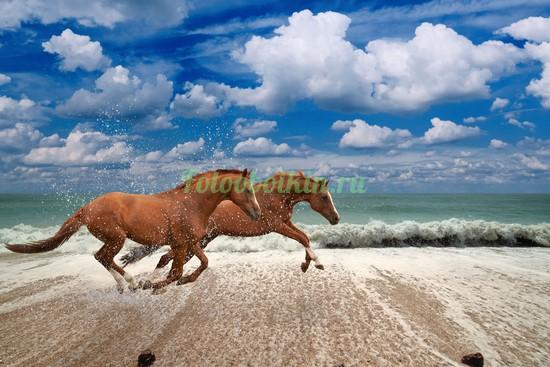 Фотообои Два коня на берегу моря