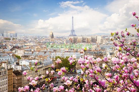 Фотообои Магнолии днем в Париже