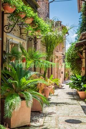 Фотообои Улочка с пальмами