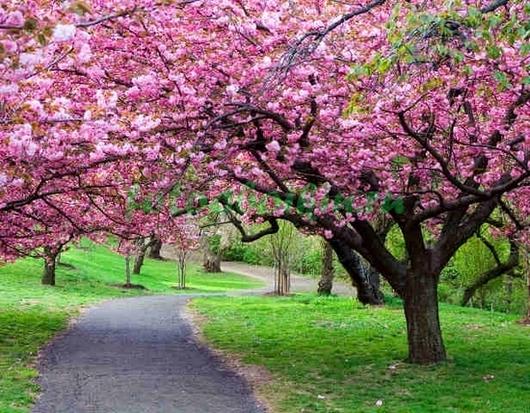 Фотообои Розовое дерево