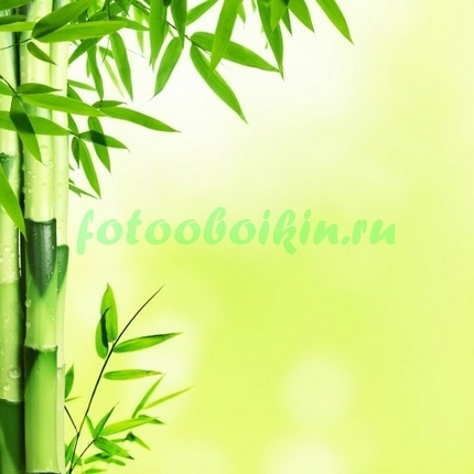 Фотообои Светлый бамбук