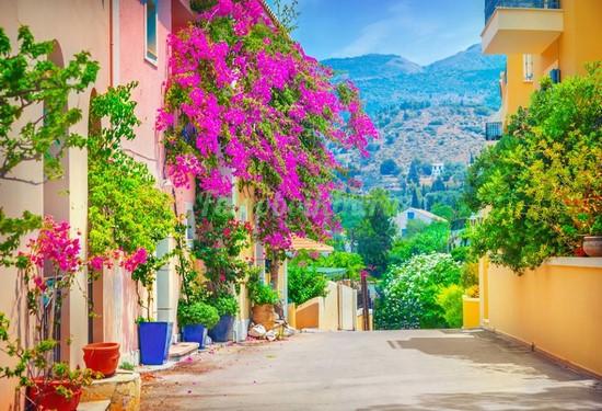 Яркая улица в цветах