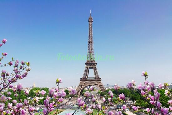 Фотообои Эйфелева башня магнолии