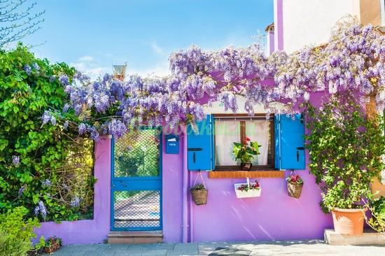Фотообои Сиреневый дворик