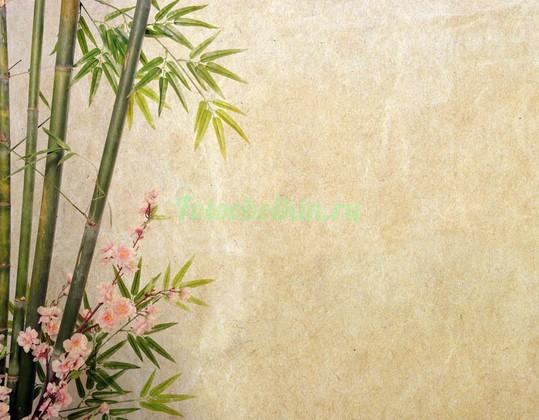 Фотообои Бамбук с веткой сакуры
