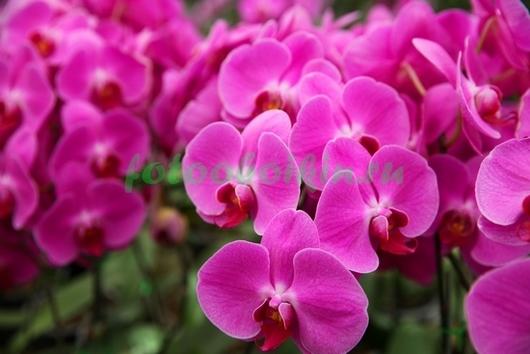 Фотообои Круглые цветы орхидеи