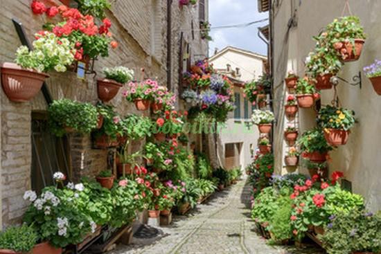 Фотообои Солнечная улочка  с цветами