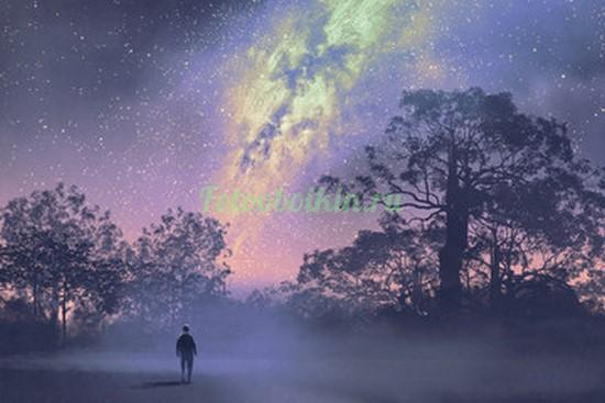 Фотообои Лес под звездным небом