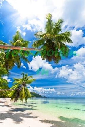 Фотообои Пальмы склоняются к воде