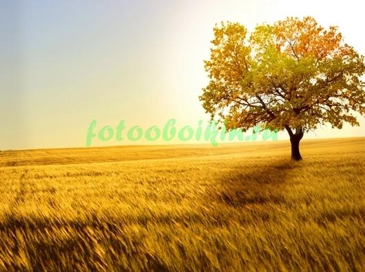 Фотообои Степь