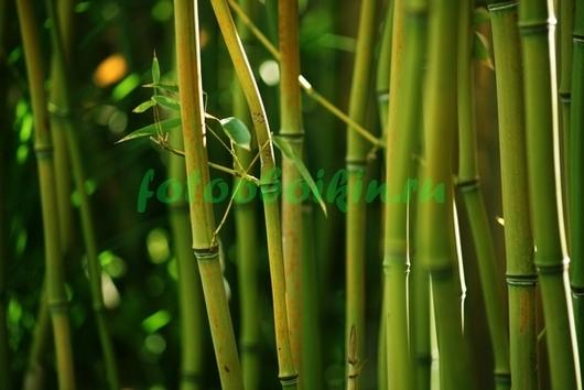 Фотообои бамбук теплый свет