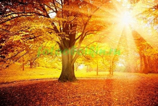 Фотообои Солнечные лучи