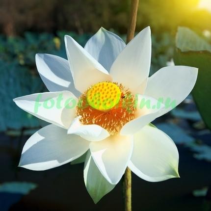 Фотообои Белый цветок