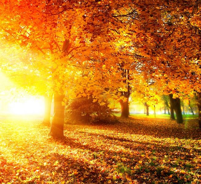 Фотообои Природа осень