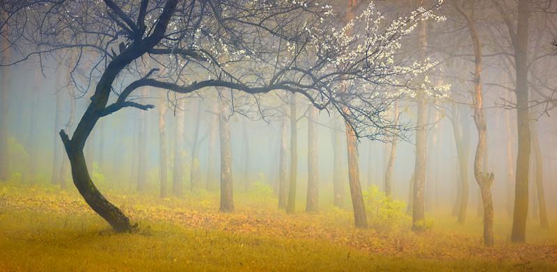 Фотообои Дерево на стену