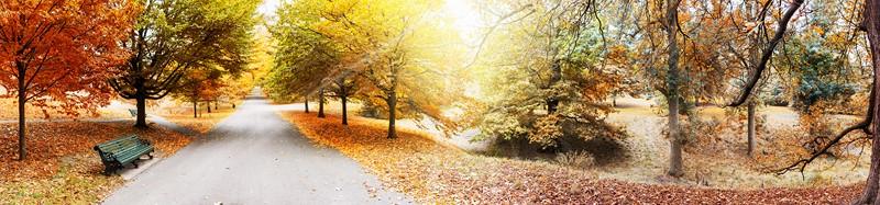Фотообои Золотая осень