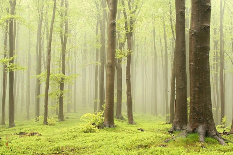 Туманный лес фото