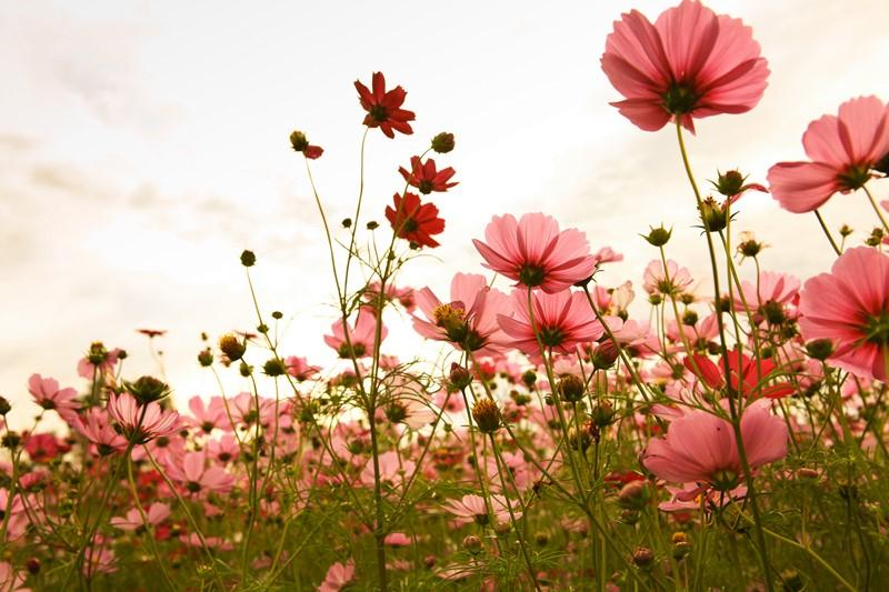 Фотообои Цветы 3д
