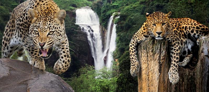 Фотообои Леопард фото