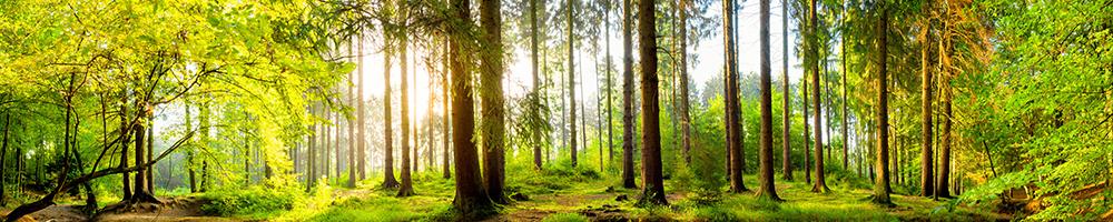 Фотообои Лес летом