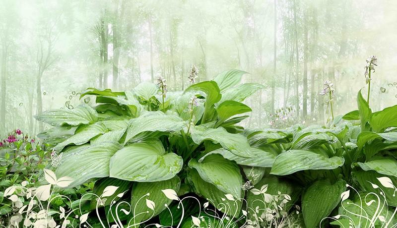 Фотообои Мокрые листья