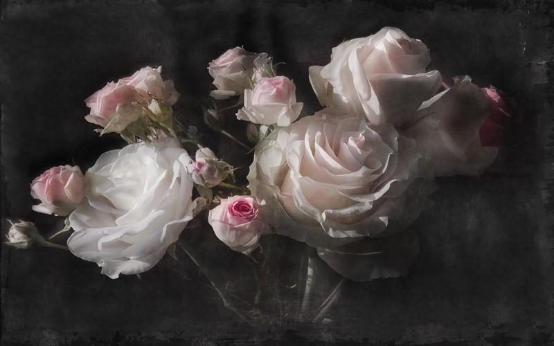 Фотообои Розы натюрморт