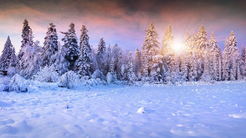 Фотообои Ели в снегу