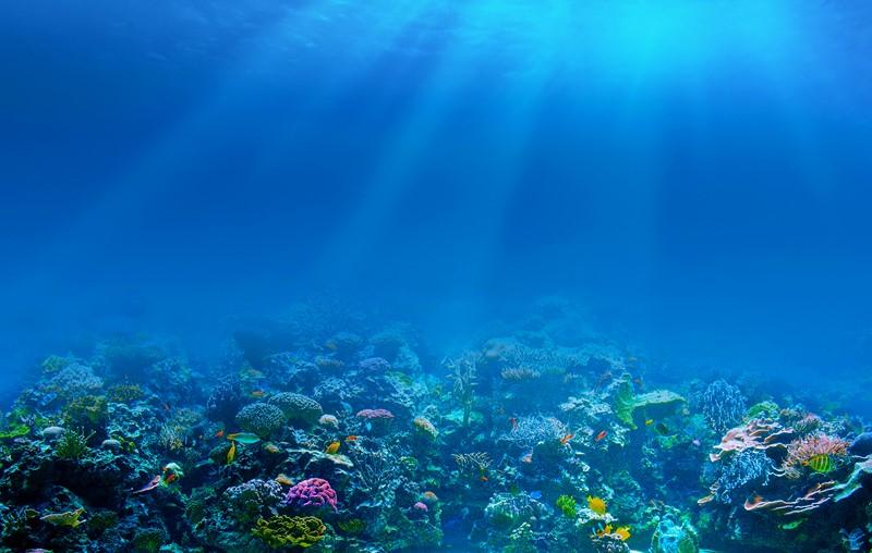 Фотообои Коралловые обитатели