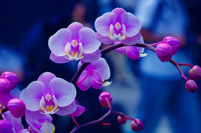 Фотообои Прелестная сакура