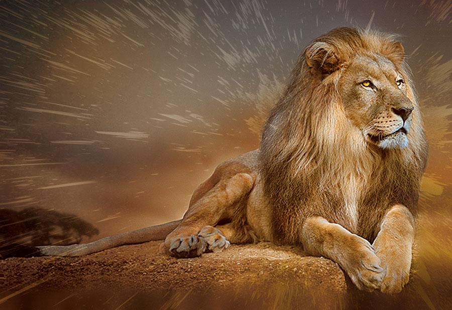 Фотообои Задумчивый Лев