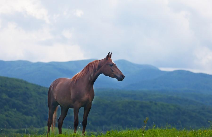 Фотообои Гнедая лошадь
