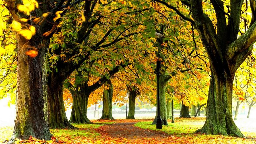Фотообои Осенняя аллея