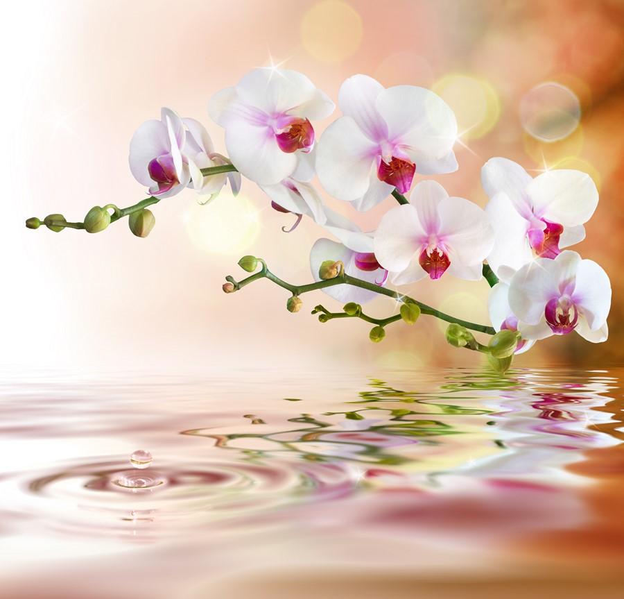 Фотообои Орхидея над водой