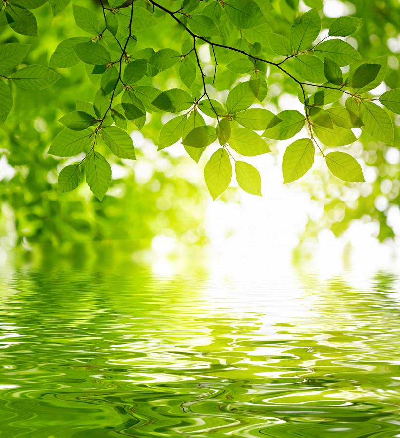 Фотообои Листья над водой