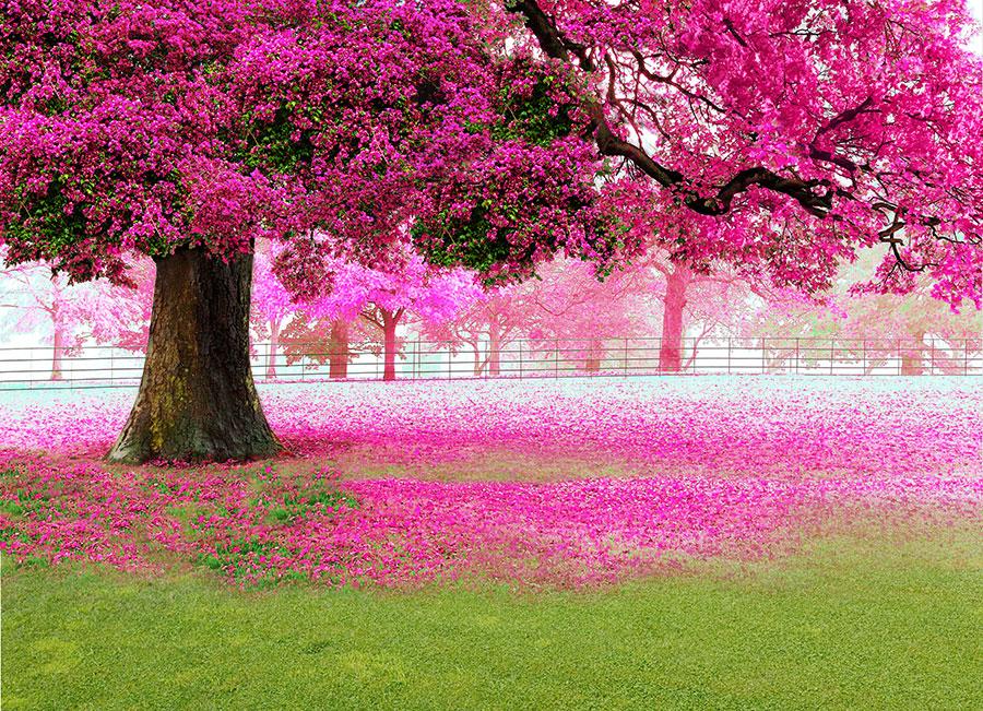 Фотообои Сакура в цвету