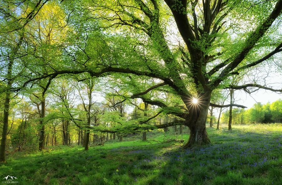 Фотообои Лесной пейзаж