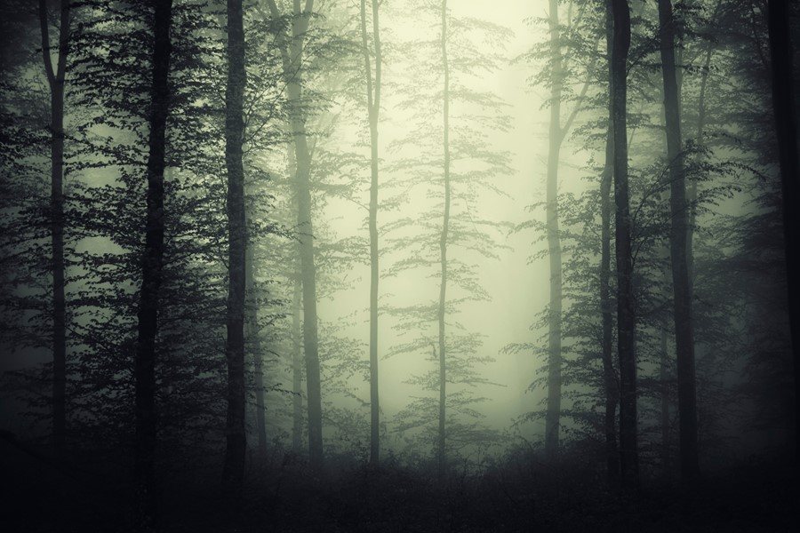 Фотообои Мистический лес