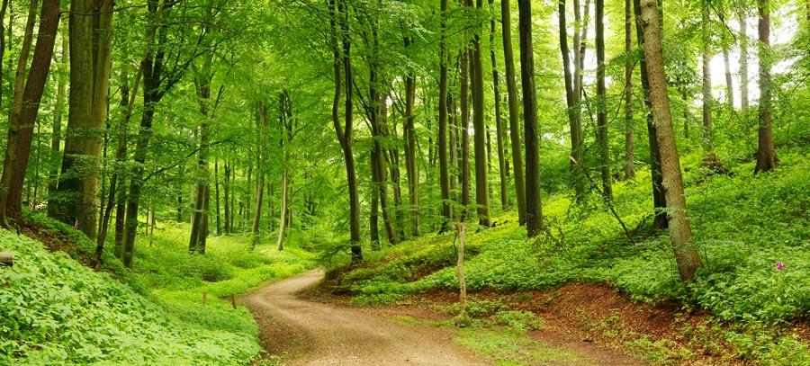 Фотообои Среди леса