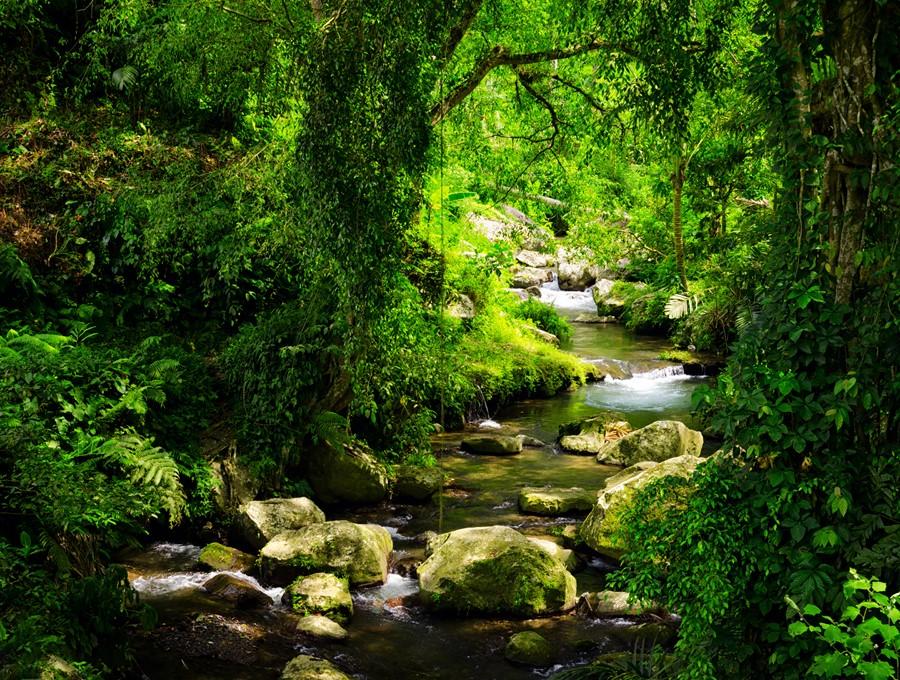 Фотообои Лесной ручей