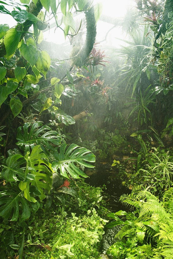 Фотообои Дождь в джунглях