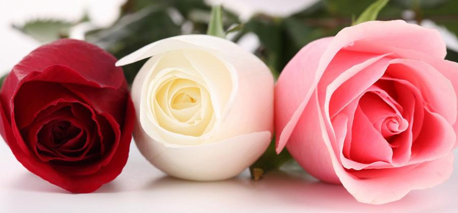Фотообои Три розы