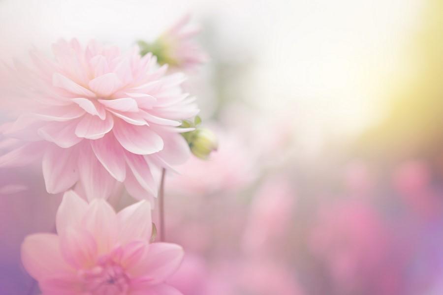Фотообои Летние цветы