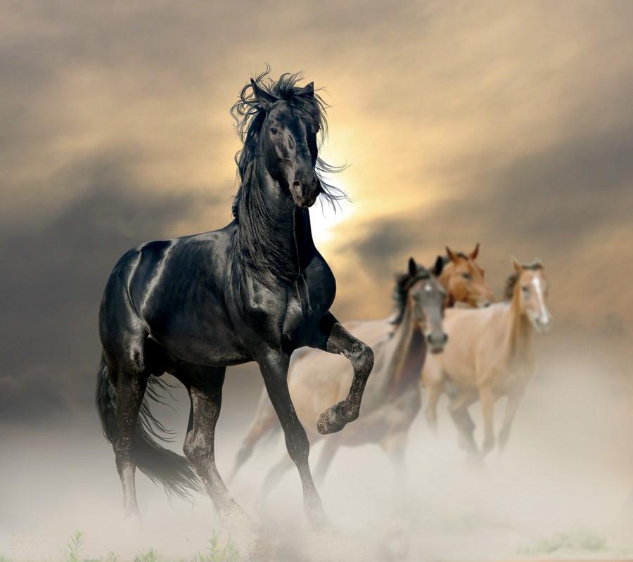 Фотообои Стадо коней