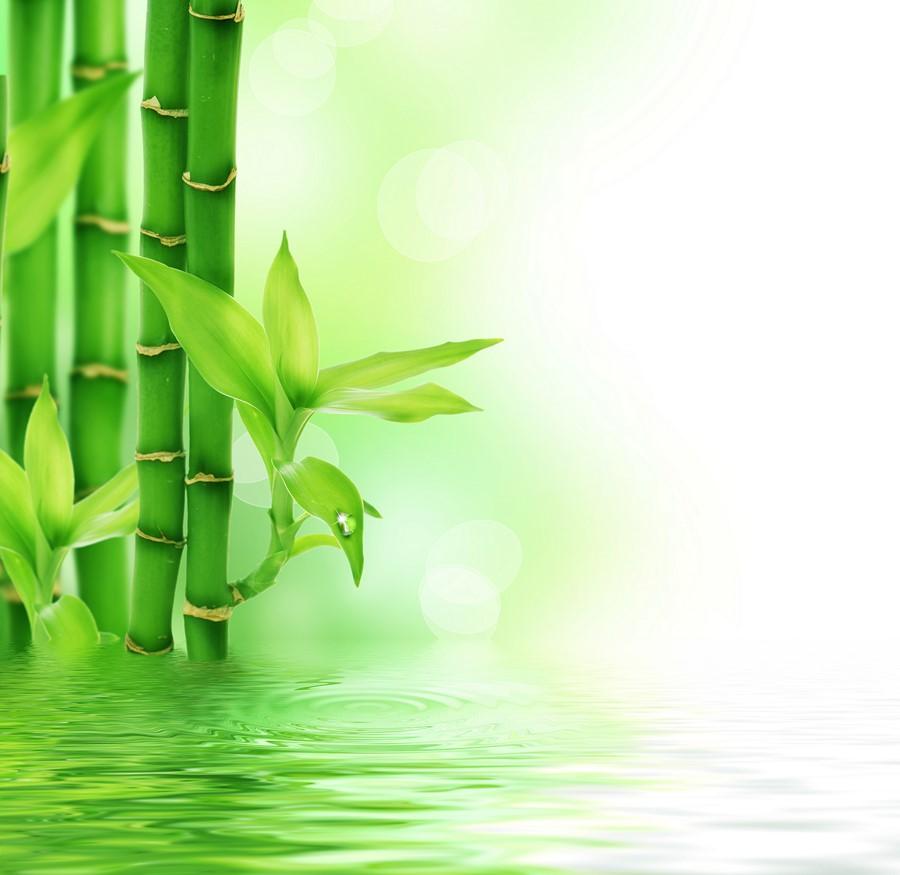 Фотообои Листики бамбука
