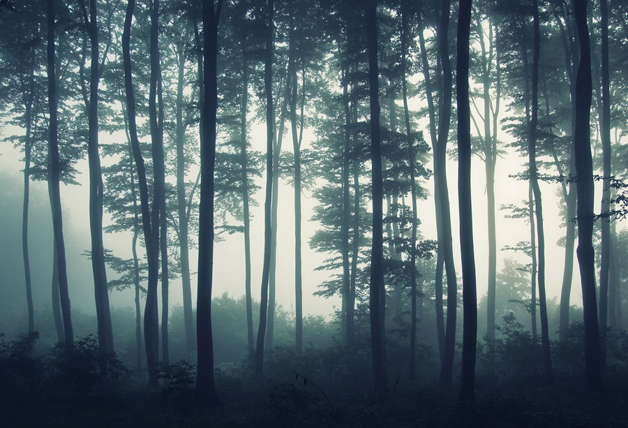 Фотообои Сумеречный лес
